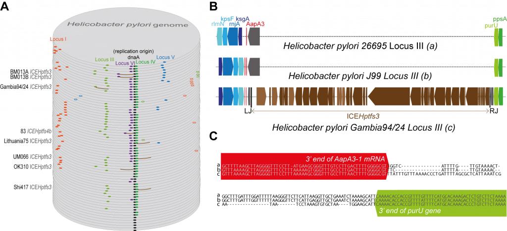 exploring toxin antitoxin-systems in epsilon protebacteria